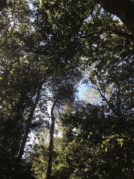 Vine Walk - Ash Tree
