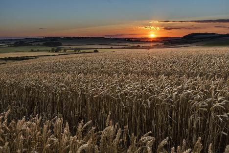 Visitor Economy - Wolds