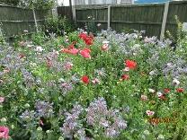 Kingfisher Wildflower Garden
